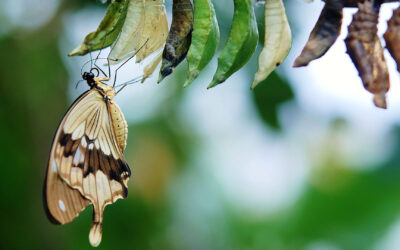Parabola Fluturelui
